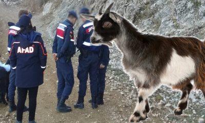 Karaman'da Bir Haftadır Dağda Mahsur Kalan Keçi'ye ne oldu?