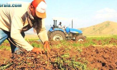 Çiftçiler 7 Milyar Liralık Mazot ve Gübre Tasarrufunu Nasıl Sağlar?