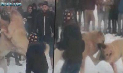 Konya'da Köpeklere Bunu Yapanlara Çok Kızacaksınız!