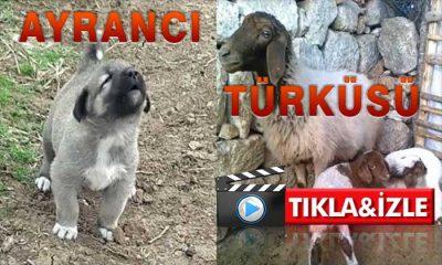 Karaman Ayrancı Türküsü İzle