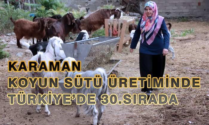 Karaman Koyun Sütü Üretiminde Türkiye'de 30. Oldu