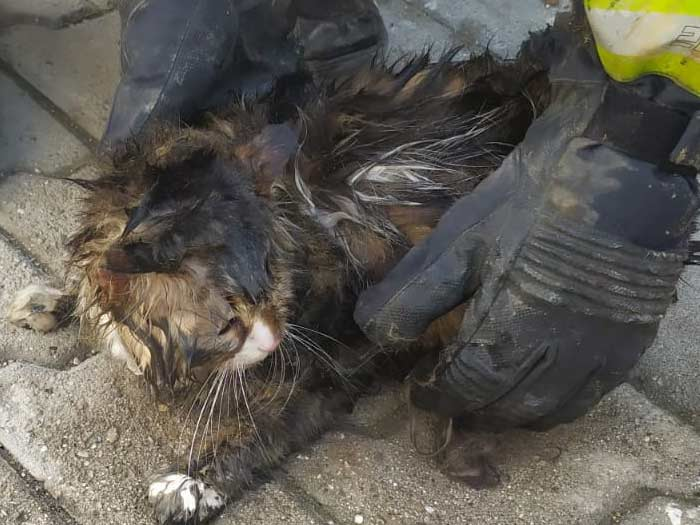 Karaman'da Kediyi Kurtarmak İçin Seferber Oldular