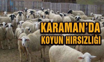 Karaman'da Koyun Hırsızlığı