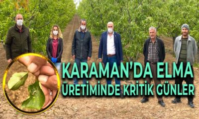 Karaman'da Elma Üretiminde Neden Kritik Günler?
