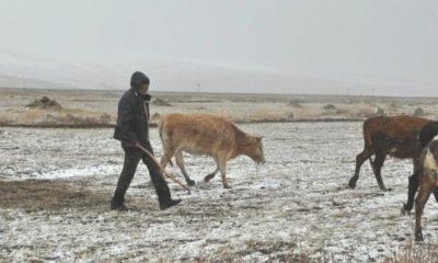 İki Köyde 45 Büyükbaş ve Küçükbaş Hayvan Donarak Öldü