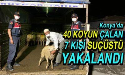 40 Koyun Çalan 7 Kişi Suçüstü Yakalandı