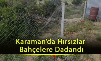 Karaman'da Hırsızlar Bahçelere Dadandı