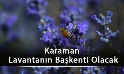 Karaman Lavantanın Başkenti Olacak
