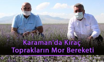 Karaman'da Kıraç Toprakların Mor Bereketi