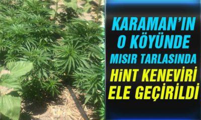 Karaman'ın O Köyünde Mısır Tarlasında Hint Keneviri Ele Geçirildi