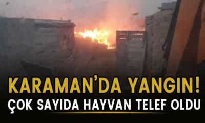 Karaman'da yangın! Çok sayıda hayvan telef oldu