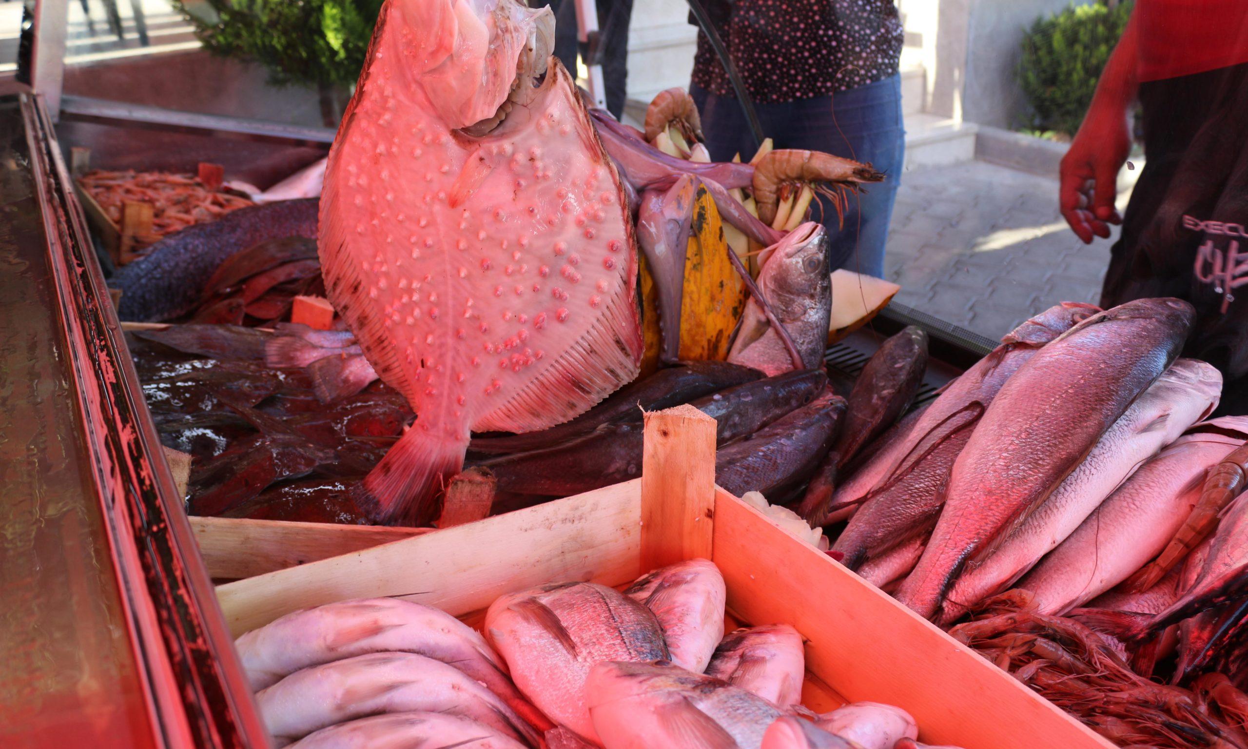 Gorget'te Balık Şenliği Başladı