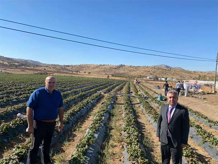 Karaman'da 28 çilek bahçesi hibe ile kuruldu