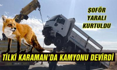 Tilki Karaman'da kamyon devirdi!