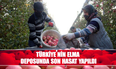 Türkiye'nin elma deposunda son hasat yapıldı