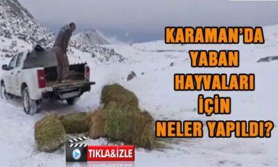 Karaman'da yaban hayvanları için neler yapıldı?