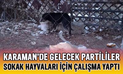 Karaman'da Gelecek Partililer sokak hayvanları için çalışma yaptı