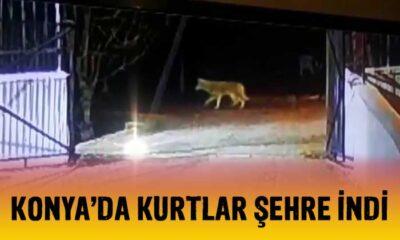 Konya'da kurtlar şehre indi!