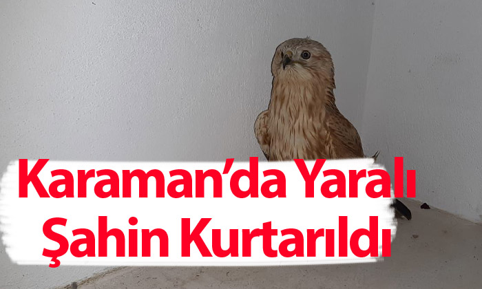 Karaman'da Yaralı Şahin Kurtarıldı