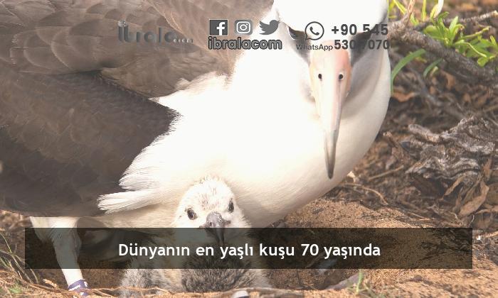 Dünyanın en yaşlı kuşu 70 yaşında