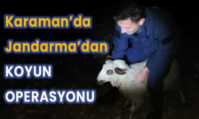 Karaman'da koyun operasyonu!