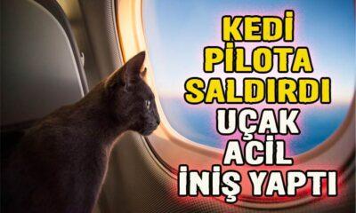 Kedi pilota saldırdı! Uçak acil iniş yaptı