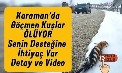 Karaman'da göçmen kuşlar ölüyor! Senin desteğin lazım