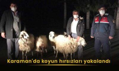 Karaman'da koyun hırsızları yakalandı