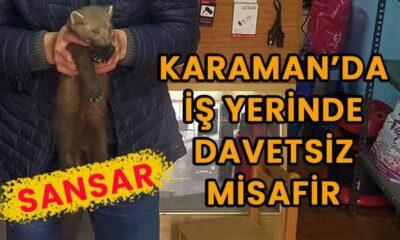 Karaman'da dükkana sansar geldi
