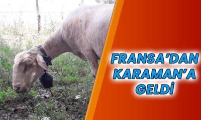 Fransa'dan Karaman'a geldi
