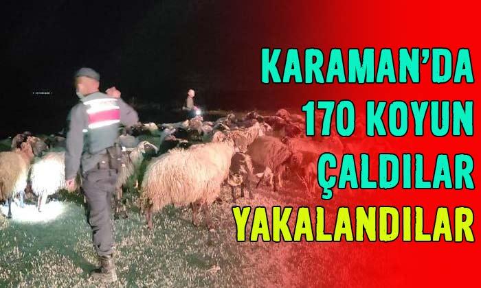 Karaman'da 170 koyun çaldılar! Yakalandılar!