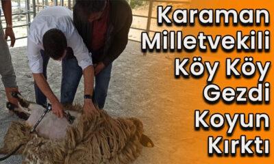 Karaman Milletvekili köy köy gezdi, koyun kırktı