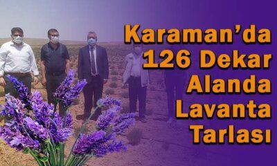 Karaman'da 126 dekar alanda lavanta tarlası