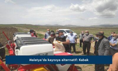 Malatya'da kayısıya alternatif: Kabak