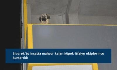 Siverek'te inşatta mahsur kalan köpek itfaiye ekiplerince kurtarıldı