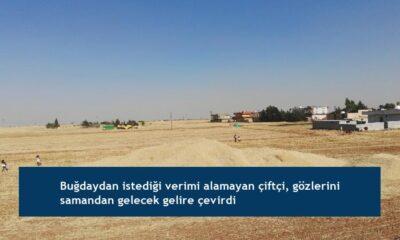 Buğdaydan istediği verimi alamayan çiftçi, gözlerini samandan gelecek gelire çevirdi