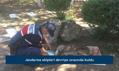 Jandarma ekipleri devriye sırasında buldu