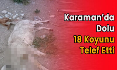 Karaman'da dolu 18 koyunu telef etti!