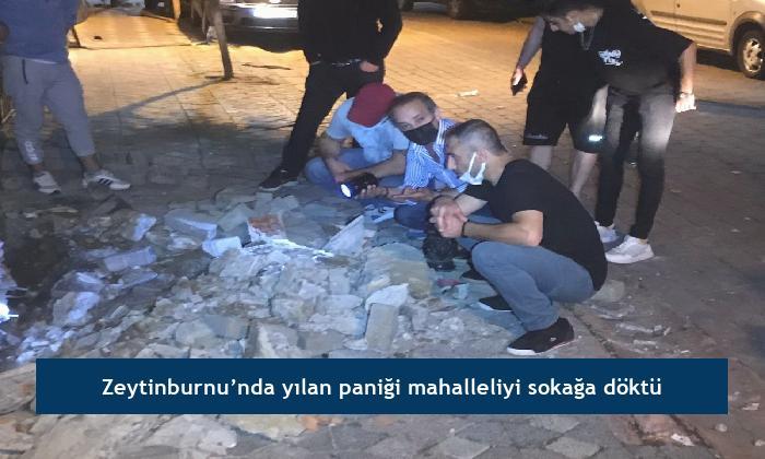 Zeytinburnu'nda yılan paniği mahalleliyi sokağa döktü