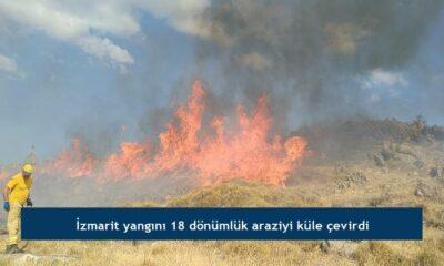 İzmarit yangını 18 dönümlük araziyi küle çevirdi