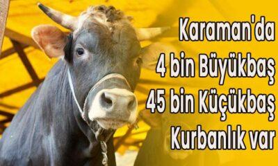Karaman'da 4 bin büyükbaş 45 bin küçükbaş kurbanlık var