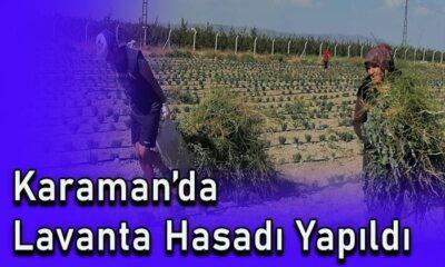 Karaman'da lavanta hasadı yapıldı