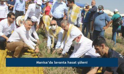 Manisa'da lavanta hasat şöleni