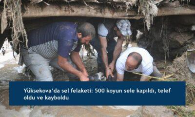 Yüksekova'da sel felaketi: 500 koyun sele kapıldı, telef oldu ve kayboldu