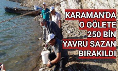 Karaman'da o gölete 250 bin yavru sazan bırakıldı