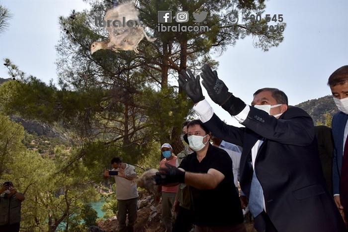 Karaman'da 840 sülün doğaya salındı