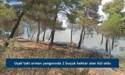 Uşak'taki orman yangınında 2 buçuk hektar alan kül oldu