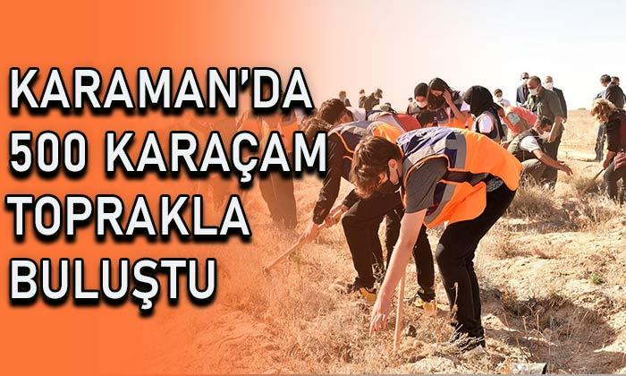Karaman'da 500 karaçam toprakla buluştu